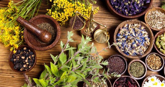 Застосування лікарських рослин